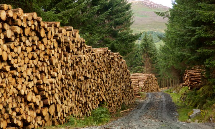 Can Irish forestry and KTGs save 430 jobs at Bord na Mona?