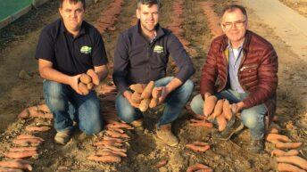 "188betapp专注于耕作:马铃薯产业为了满足需求而变得""甜"""
