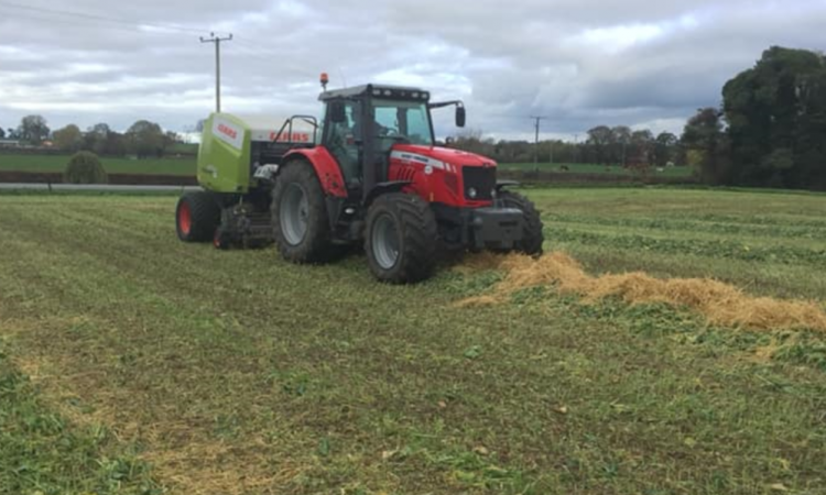 Thinking of baling forage crops? Here are some tips