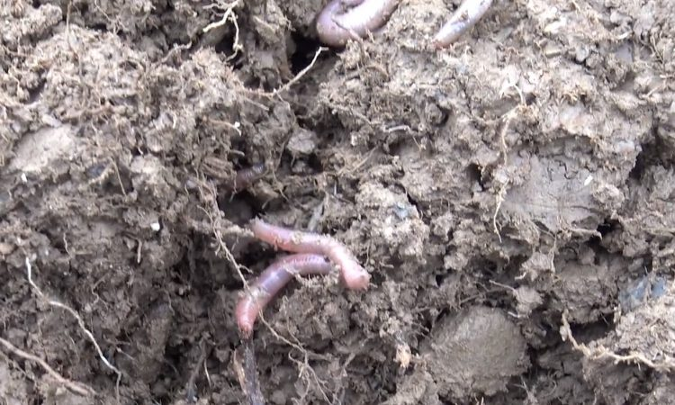 What are the 3 steps involved to improving my soil performance?