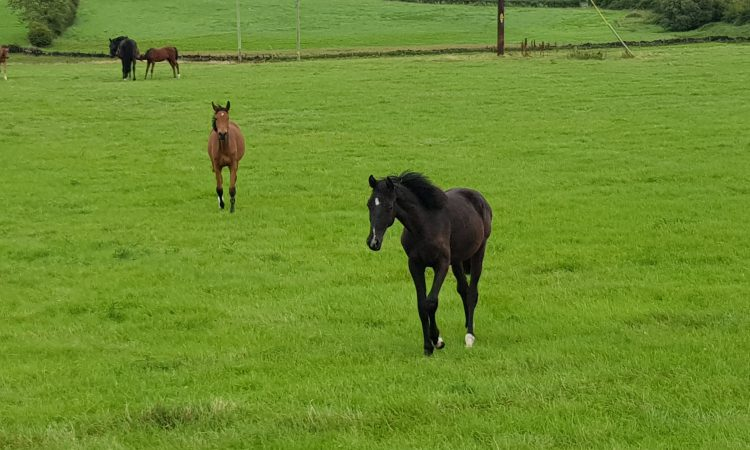 Almost 22,000 Irish horses slaughtered in last three years