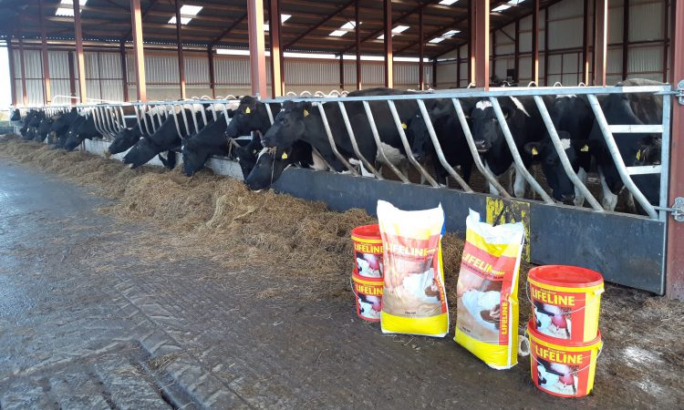 Pre-calving mineral boosting colostrum quality on Co. Kilkenny-based dairy farm
