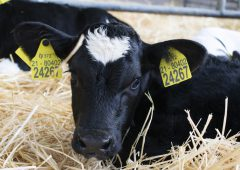 New app launched to 'take the hassle' out of replacing cattle tags