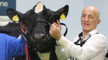 Co. Dublin breeder wins Royal Ulster Winter Fair Inter-Breed Championship