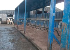 Old shipping container regenerated into cow cubicles