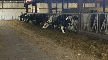 Dairy focus: Producing milk all year round with a pedigree Holstein herd in Co. Galway