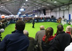 Winter Fair: Crowds flock to NI's flagship dairy show