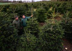 """真正的爱尔兰圣诞树:""""没有圣诞树就不会一样了。"""""""