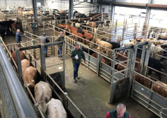 Calls for funding 'to get marts back on track' after Covid-19