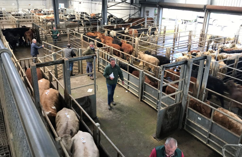 Cattle marts: Less exporter activity in some areas