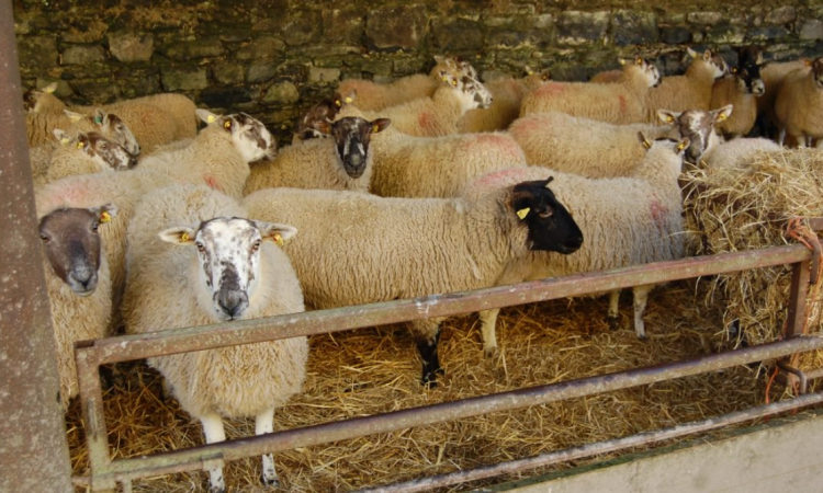 Reminder: Time to count your sheep for the 2018 census