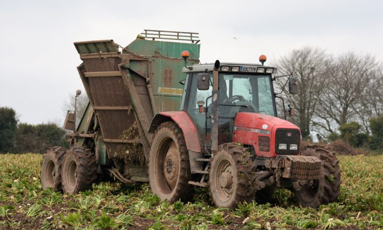 Beet Ireland expected to make announcement in coming weeks