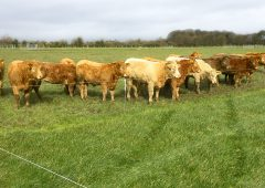 Can beef farmers handle no-deal Brexit ramifications?