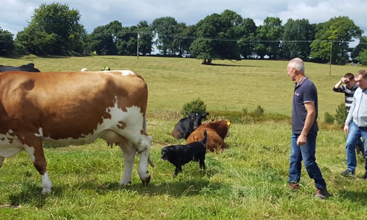 Social Farming benefits to be highlighted at open day