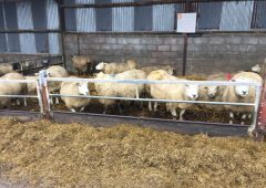 'It has been a challenging year for sheep farmers' – Teagasc's John Kelly