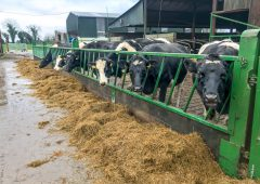 Dairy advice: Selecting cows for drying off; weanling heifers; and minerals