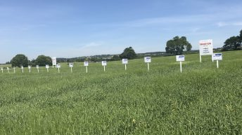 Big yield 'Prospect' at the top of the spring barley list