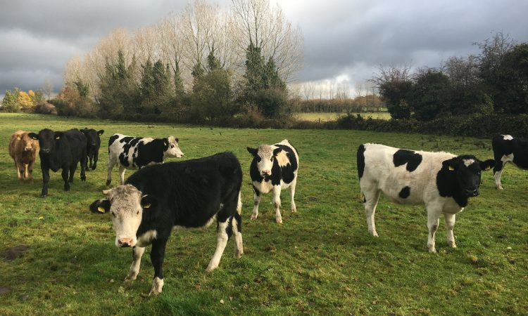 Location strong selling point for Newbridge land