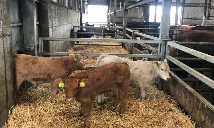 Increased turnaround times for BVD testing expected due to Covid-19