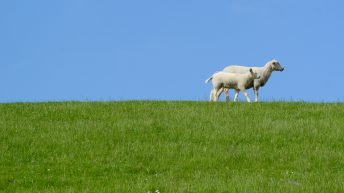 Importance of dog control during lambing season highlighted