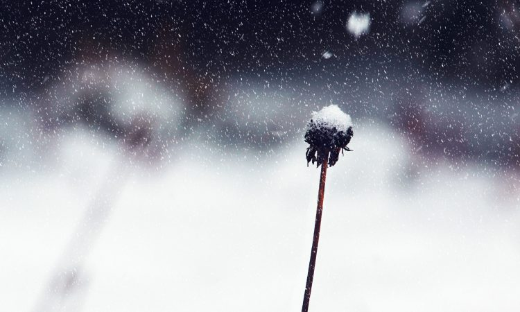 Wind warning for south – with first snow of 2019 forecast
