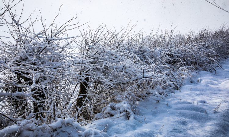 Temperatures set to nosedive to -6° tonight – Met Eireann