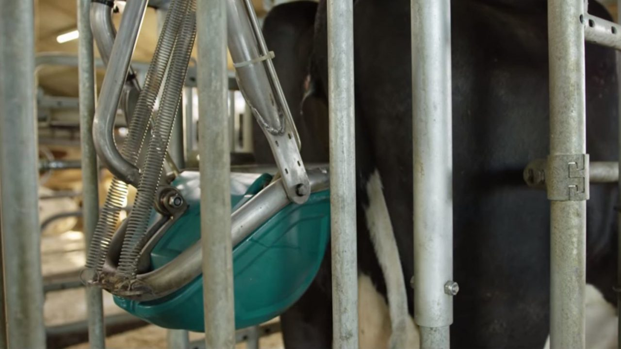 Dutch firm to test 'cow toilets' to cut farm ammonia emissions