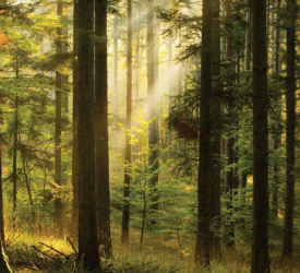 Forestry: 'Cliff-edge drop in productivity gone on far too long'