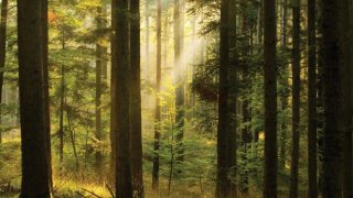 Project Woodland: First interim report published