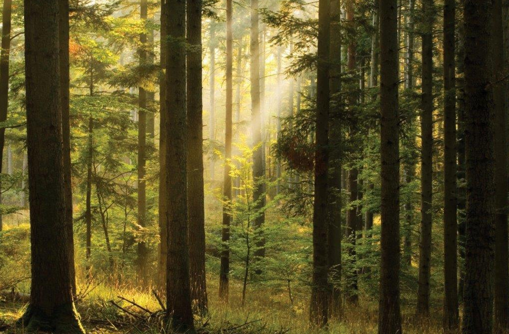 McConalogue and Hackett launch new forestry initiative