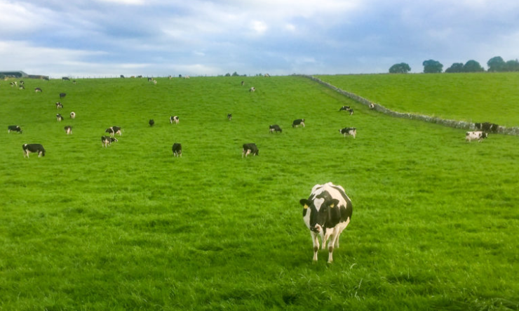 How this new feed additive is providing a solution for milk producers