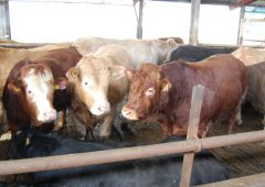 Creed urged to seek EU beef price intervention commitment