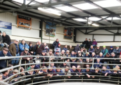 Heifers sell to a top price of €1,600/head at Ballinrobe Mart