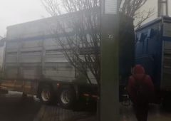 Cattle lorry gets stuck in narrow Castlebar side street