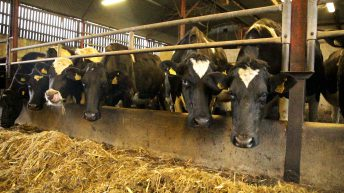 FARM SMART: Automation and technology top of the agenda on Co. Tipperary dairy farm