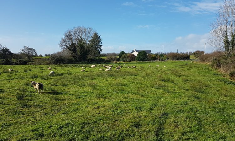 Co. Mayo location sees 48ac of mixed-quality agricultural land in 1 parcel