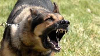 'Next government must get serious on dog attacks'