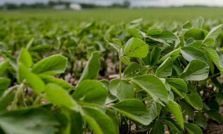 Soybeans: What you need to know and why US soybeans are important to Irish farmers