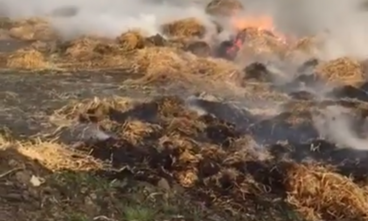 Christmas chaos: 50 bales lost in Kerry farm fire