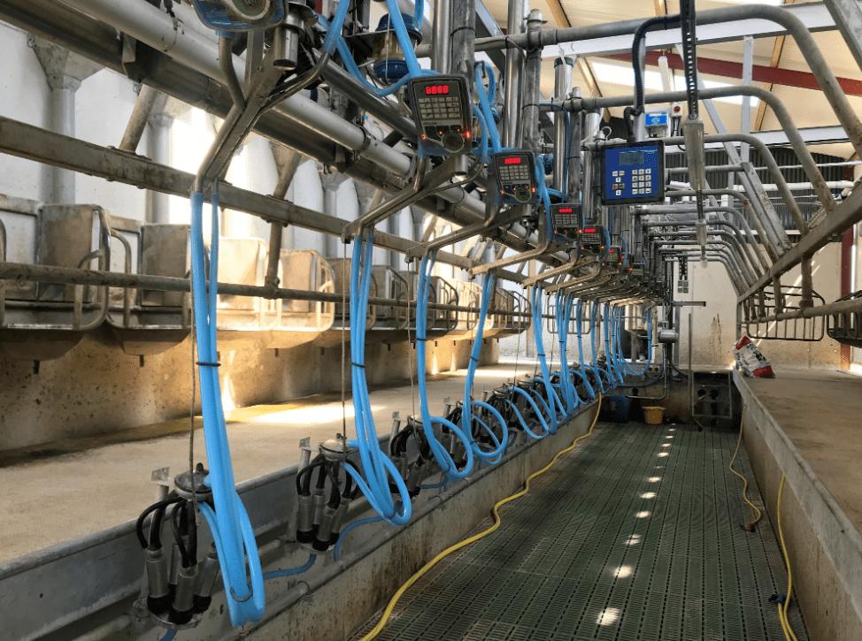 Ornua milking Lakeland