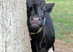 How can forestry fit into a dairy farmer's plans?