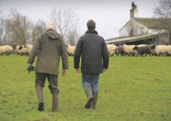 €70,000 cap on tax relief 'could discourage' young farmers