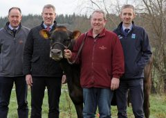 Clandeboye Estate to host Jersey cattle open day