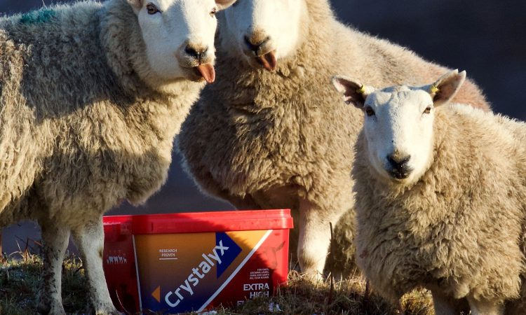 Are you feeding your ewes the correct nutrition prior to lambing?