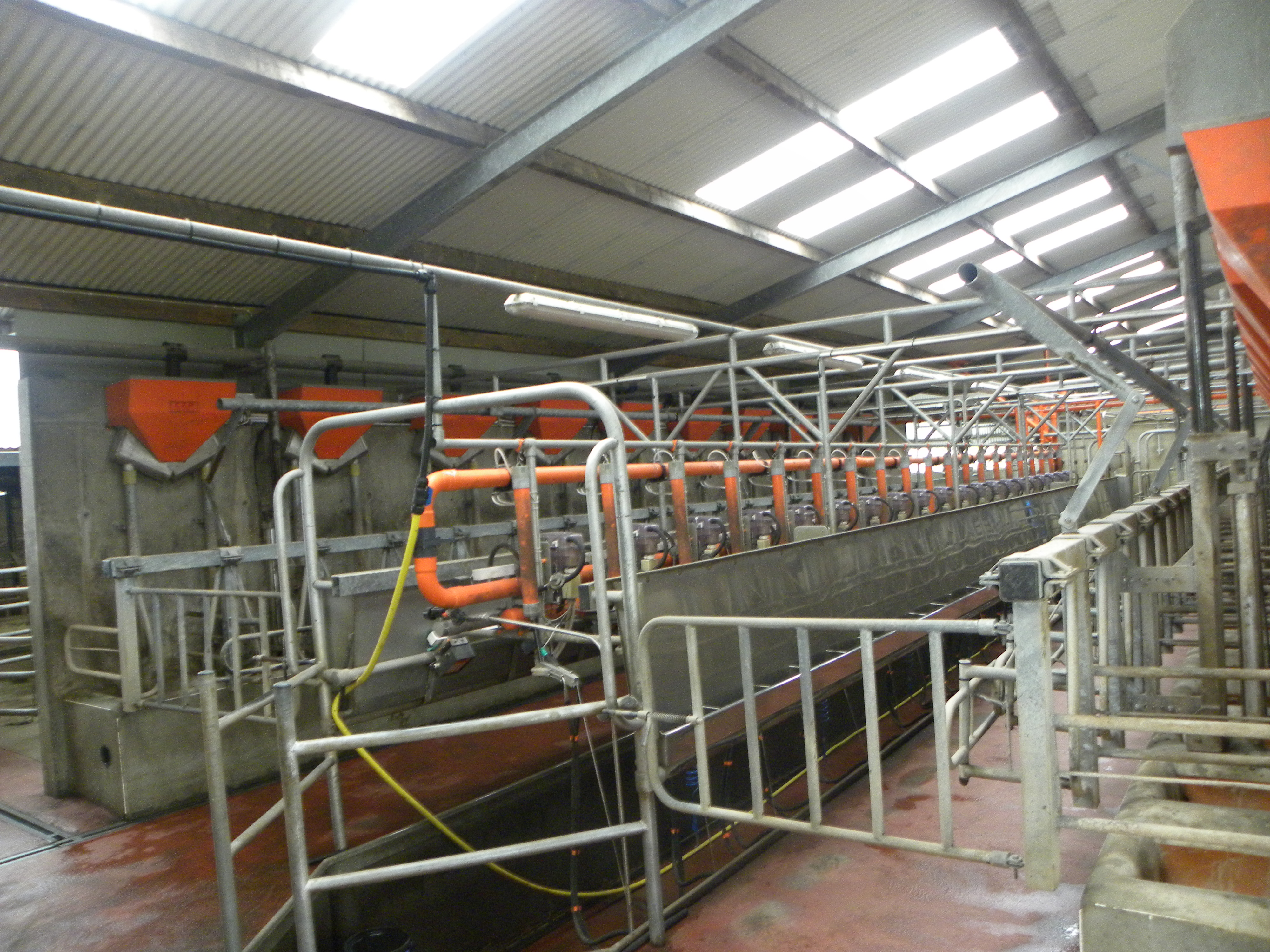 Aurivo announces milk price boost for January supplies