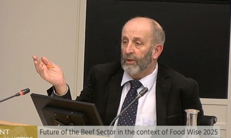 Investigation into beef industry called for by Healy Rae