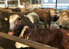 Creed to travel to Turkey to address ban on live cattle imports