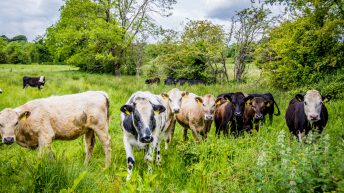 Are the 6.9 million animals in Ireland sustainable?