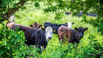 New Environmental Farming Scheme opens in Northern Ireland