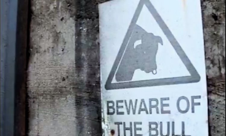 'It was like a bus hit me': Stark safety warning following bull attack